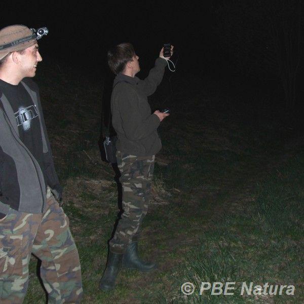 Detekcja nietoperzy (Fot. A. Buczyński)