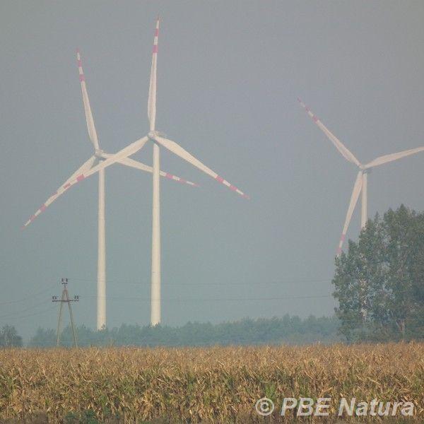 Farma wiatrowa w okolicach Kutna (Fot. A. Urbanek)